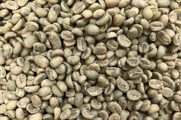 【入荷】個性豊かなイルガチェフェ ハロハディ集落の豆