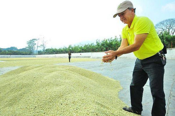 【新入荷】グァテマラ「サンタ・カタリーナ農園モンターニャ区画」