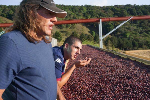 【新豆入荷情報】稀少品種&カフェインレスも。