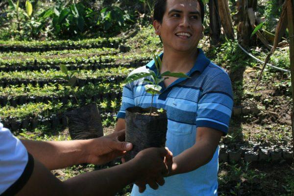 ペルーの希少品種コーヒー豆が入荷:イエロー・ブルボン