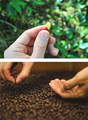 生の豆と焙煎中の豆