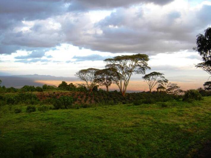 ブラックバーン農園からの風景